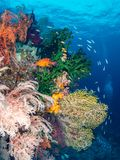 Unparalleled levels of marine diversity. Misool, Raja Ampat, Indonesia. The reefs in the Misool Marine Protected Area within Raja Ampat, Indonesia, are the royalty free stock photos