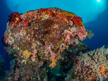 Unparalleled levels of marine diversity. Misool, Raja Ampat, Indonesia. The reefs in the Misool Marine Protected Area within Raja Ampat, Indonesia, are the stock image