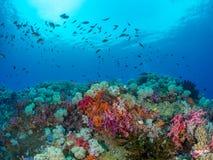 Free Unparalleled Levels Of Marine Diversity. Misool, Raja Ampat, Indonesia Stock Image - 151393941