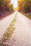 Unpaved country road in autumn. Unpaved colorful country road in autumn Royalty Free Stock Photos