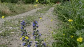 Unpaved Country Road. A village country road, with blue flowers and herbs swaying in wind on side. Traces from wheels can be seen on middle stock video