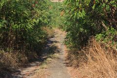 Unpaved countryside path Royalty Free Stock Image