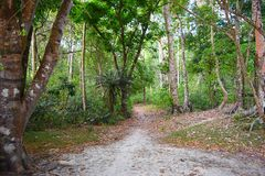 An Unpaved Dirt Road through Green Forest with Tall Trees around - A Walk on Green Earth - Environment stock photos