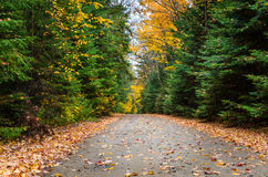 Unpaved Forest Road Dotted with Fallen Leaves in Autumn Royalty Free Stock Photos