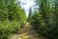 A forest road in the middle of the taiga stock photography