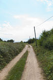 Unpaved road amidst plants Stock Images