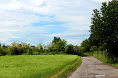 Unpaved road and corn field Stock Photography