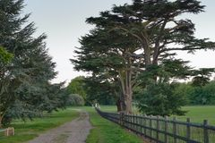 Walk in the park royalty free stock photography