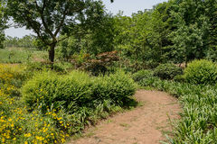 Unpaved rural footpath in verdant summer green Royalty Free Stock Image