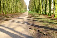 Unpaved väg i bokträdskogen Arkivfoton