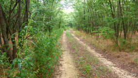 Unpaved väg i skogen royaltyfria foton