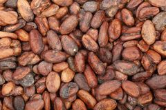 Unpeeled cocoa bean as a background top view Royalty Free Stock Images