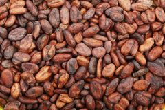 Unpeeled cocoa bean as a background top view Stock Photo