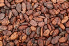 Unpeeled cocoa bean as a background top view Stock Photos