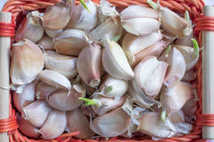 Unpeeled garlic cloves in a basket Royalty Free Stock Photos