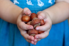 Unpeeled hazelnuts in little girl hands Royalty Free Stock Photography
