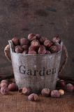 Unpeeled hazelnuts in a wooden bucket Royalty Free Stock Photo