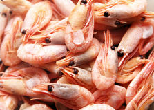 Unpeeled prawns. Ready-to-eat unpeeled prawns close up full image Royalty Free Stock Photography
