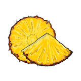 Unpeeled round and wedge cut pineapple slices, sketch vector illustration. Unpeeled round and wedge cut pineapple slices, sketch style vector illustration Royalty Free Stock Photo