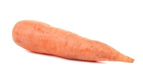 Unpeleed fresh carrot. Stock Photography