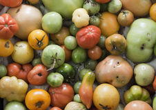 Unperfect tomatoes assortment Royalty Free Stock Photography