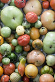 Unperfect tomatoes assortment Stock Photo