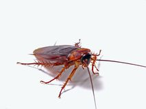 Unpleasant insect. Royalty Free Stock Photo