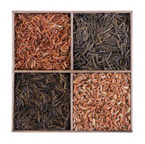 Unpolished brown wild rice. Stock Images