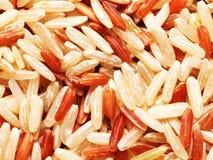 Unpolished rice Royalty Free Stock Image