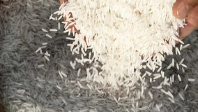 Unprocessed rice being poured from a man's hands. Slow motion stock video