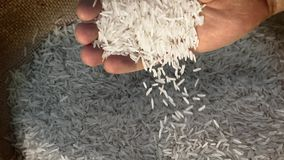 Unprocessed rice being poured from a man's hands. Slow motion stock video footage