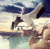 Unreal landscape and birds. Birds and sunset surreal landscape Royalty Free Stock Photo