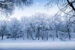 Unreal light of the winter sky and snow-covered trees in the evening. Of a frosty day stock photo
