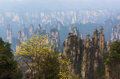 Unreal mountain peak in the early morning. In China National park Royalty Free Stock Image