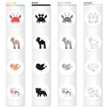An unrealistic cartoon animal icons in set collection for design. Toy animals vector symbol stock web illustration. An unrealistic cartoon animal icons in set Stock Photography