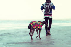 Unrecognisable hipster girl walking her dog, Greyhound, on the beach. stock photos