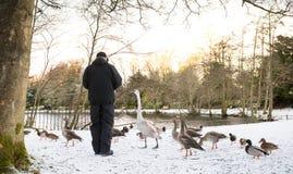 Unrecognisable senior man feeding wild birds , snow covered landscape. Edinburgh, Scotland Stock Photo