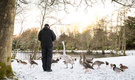 Unrecognisable starszy mężczyzna karmi dzikich ptaki, śnieg zakrywał krajobraz Zdjęcie Stock