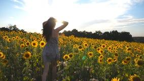 Unrecognizable όμορφο κορίτσι που τρέχει στον κίτρινο τομέα ηλίανθων και που αυξάνει τα χέρια στο χρόνο ηλιοβασιλέματος Ευτυχής ν απόθεμα βίντεο
