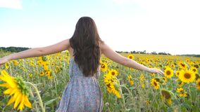 Unrecognizable beautiful girl running on yellow sunflower field. Happy young woman jogging through the meadow during stock footage