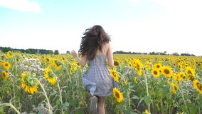 Unrecognizable beautiful girl running on yellow sunflower field. Happy young woman jogging through the meadow during. Summer day. Freedom leisure concept. Slow stock video footage