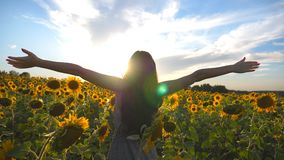 Unrecognizable beautiful girl standing on yellow sunflower field and raising hands. Happy woman enjoying freedom at the stock footage