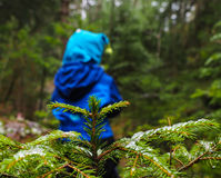 Unrecognizable boy in blue walking away from a spruce tree. Unrecognizable boy in blue walking away from a spruce with ice on needles at winter in a dark forest stock photo