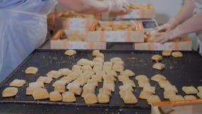 Unrecognizable ciasto szefa kuchni kocowania ciastka, ciastka w przemysłowej karmowej fabryce Ciastko linia produkcyjna zdjęcie wideo