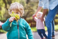 A father with his toddler children outside on a spring walk. Royalty Free Stock Image