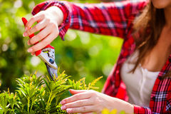 Unrecognizable gardener pruning little tree, green sunny nature Royalty Free Stock Images