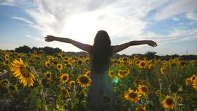 Unrecognizable girl standing on yellow sunflower field and raising hands. Young beautiful woman in dress enjoying summer