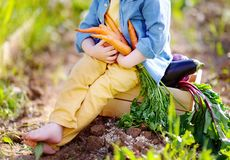 Unrecognizable little boy holding a bunch of fresh organic carrots in domestic garden Stock Photo