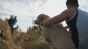 Unrecognizable mężczyzna siedzi na trawie przy łąką i muska jego labradora przy lato czasem Młody facet wydaje czas wraz z zbiory