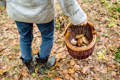 Unrecognizable man holding basket with mushooms, autumn forest Stock Images